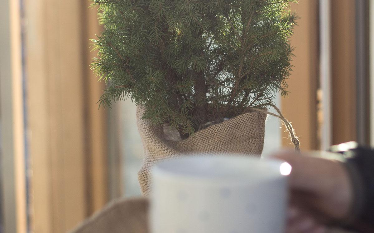 Jak dbać o drzewko zimą? 1