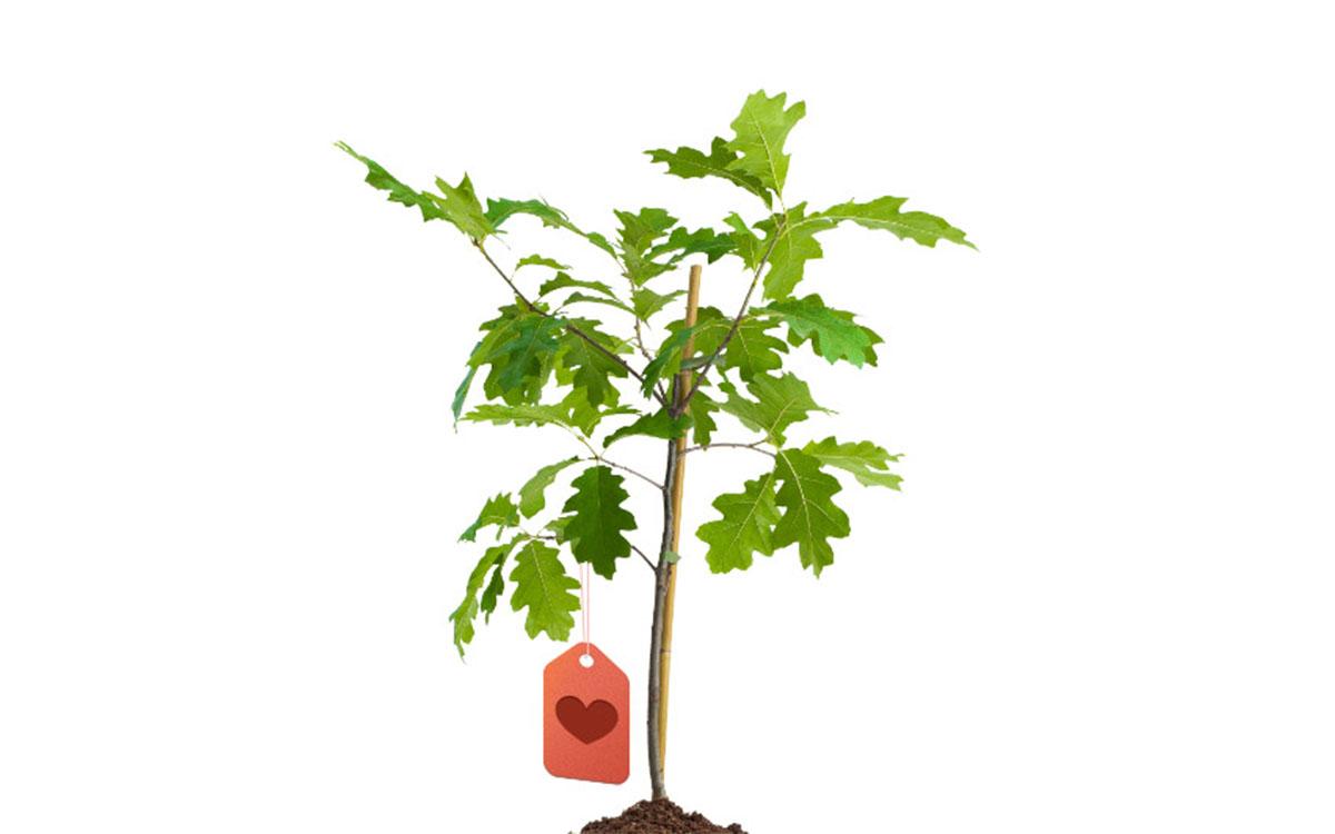 O czym warto pamiętać wybierając drzewko na prezent 1