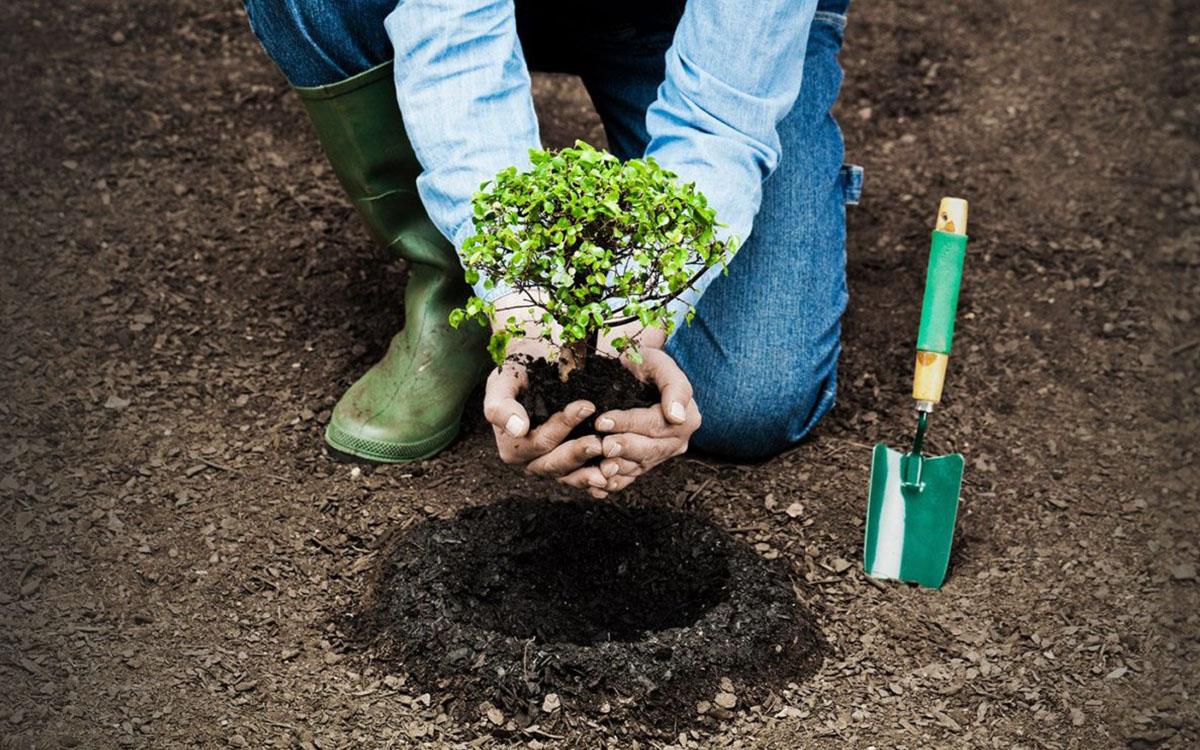 Sadzenie drzew to ważny symbol 1