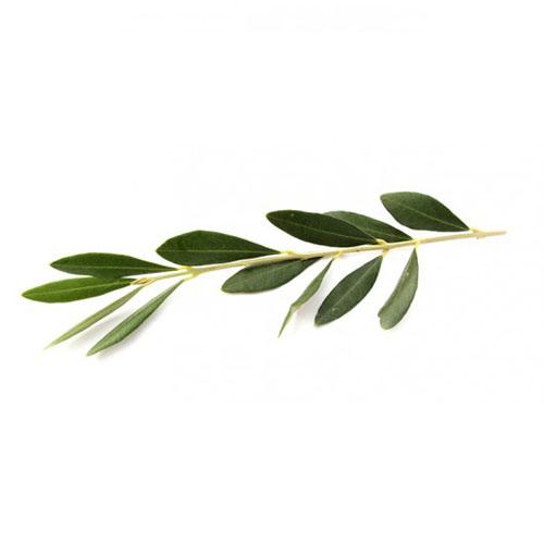 Zestaw upominkowy Drzewo oliwne 4