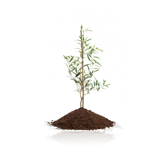 Zestaw upominkowy Drzewo oliwne 3