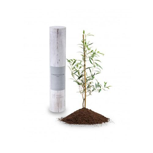 Zestaw upominkowy Drzewo oliwne 1
